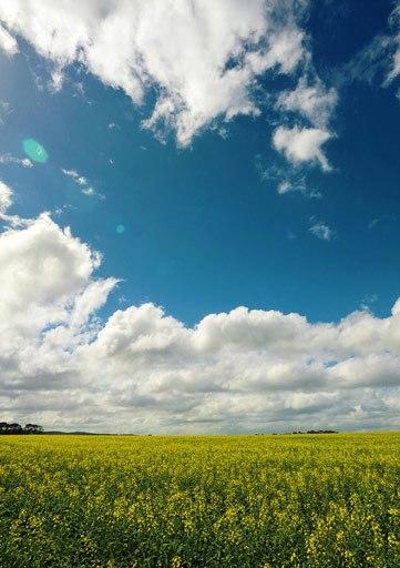 Mùa xuân với cánh đồng hoa vàng bất tận.